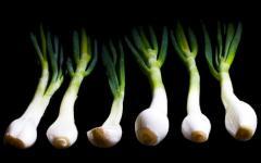 jarní cibulka - přirozené prebiotikum
