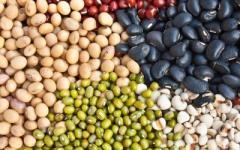 různé druhy fazolí jako výborný zdroj vlákniny